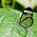 papillon transpaernt capteurs