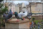 Mouettes et Pigeons 01