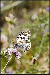 Le papillon qui sourit