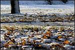Quand l'automne prend des allures d'hiver (2)
