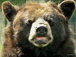 DSCN3698okok  ours de Planéte sauvage, Port saint Pierre à Nantes