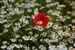 Flore au 50mm