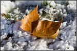 Quand l'automne prend des allures d'hiver 2