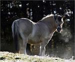 le cheval dans le froid  du matin jpeg